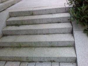 bwin娱乐平台下载灰台阶石